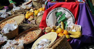 Movimentos populares defendem a agroecologia como o modelo de produção de alimentos